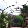 Couloir de rosiers